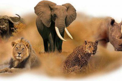 Gli animali pi belli che vivono in sud africa scuoladelia for Foto di zig e sharko