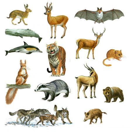 I mammiferi caratteristiche gestazione e gruppi for Pesci con la e